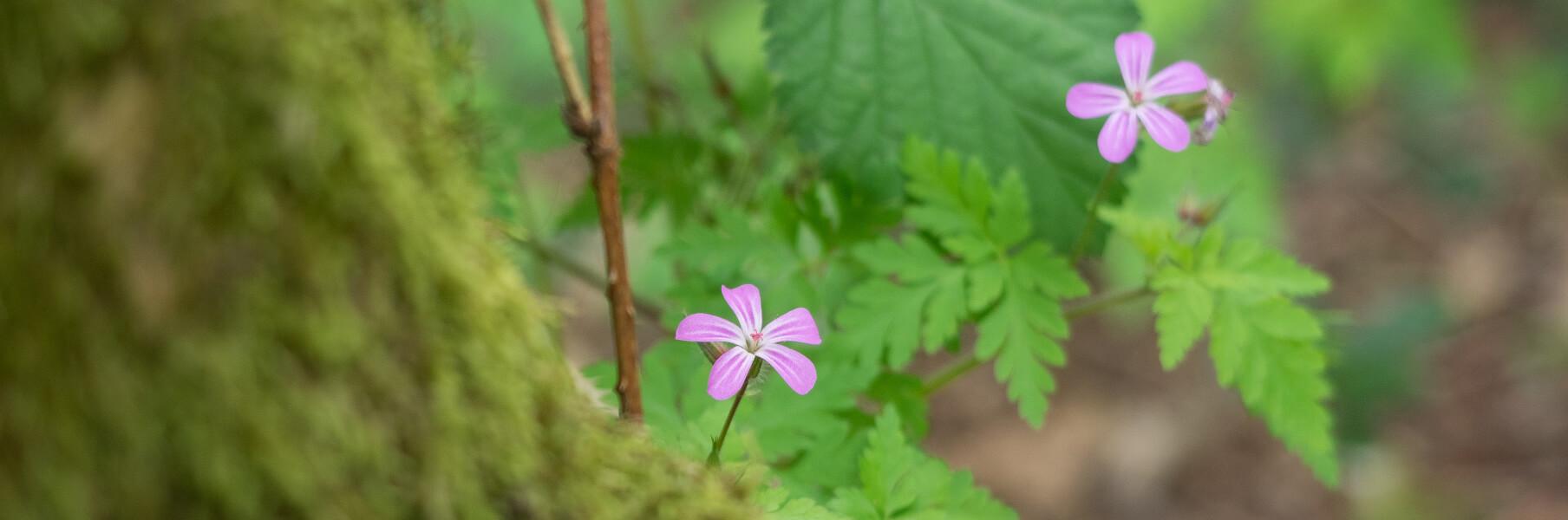 Bloemen Heide nabij locatie compassietraining