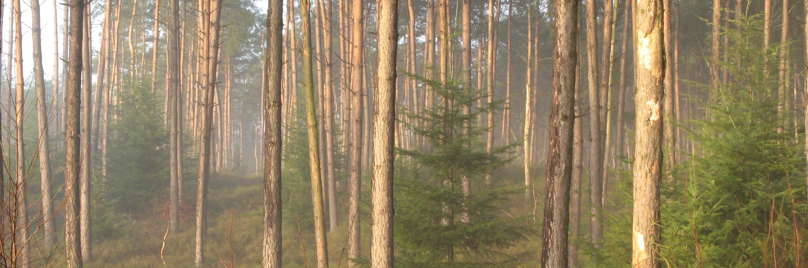 Rustig stil bos met kleine dennenboom tussen hogere bomen
