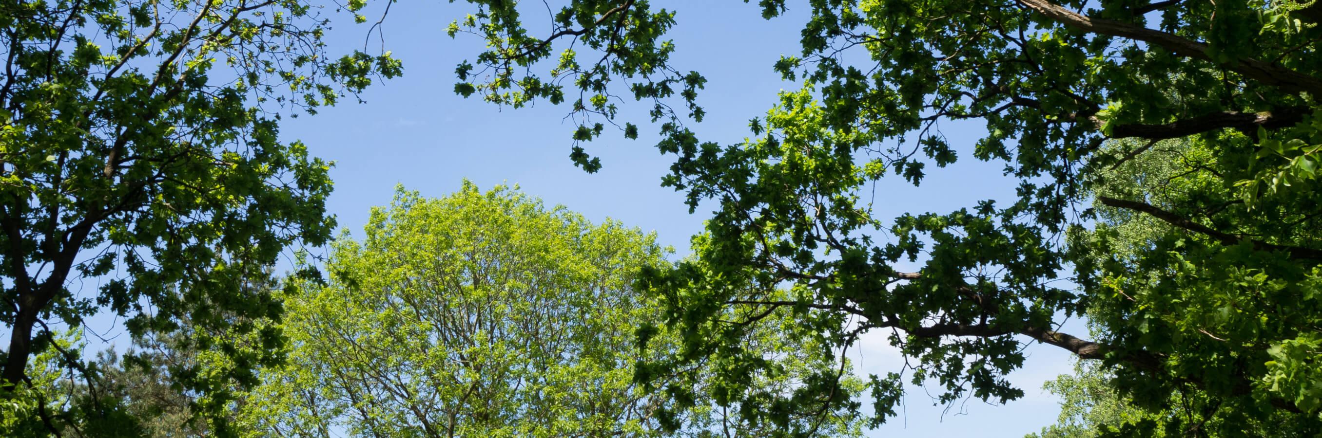 Bussum heide bomen