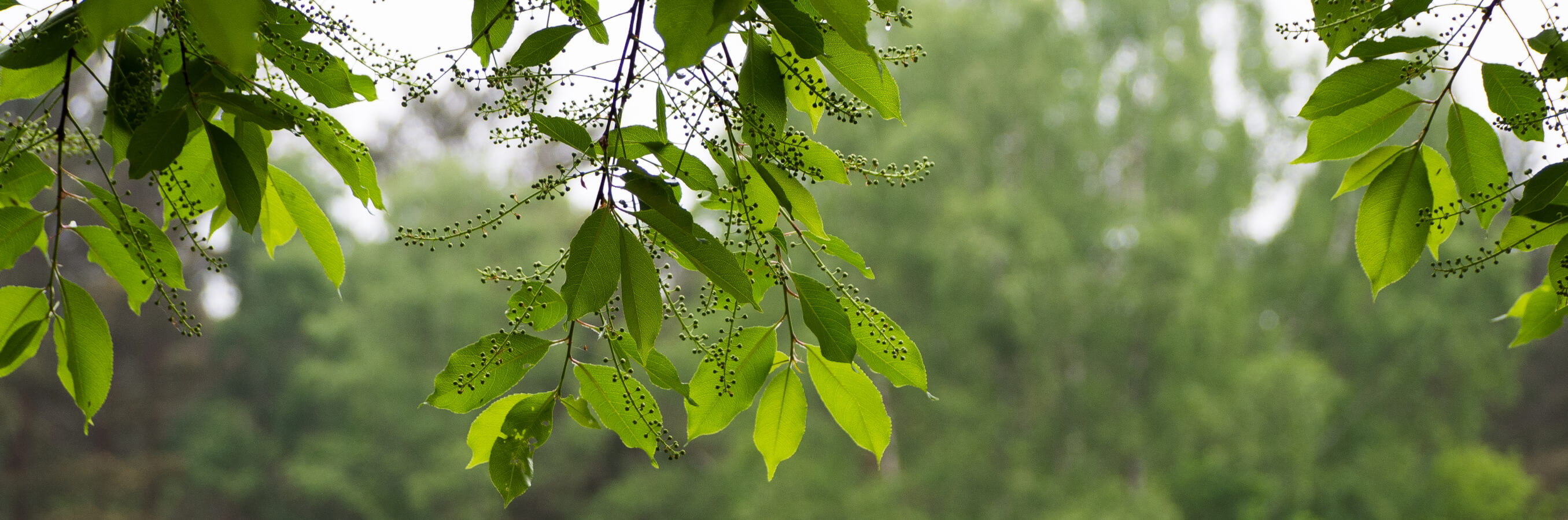 Heide Bussum bladeren nabij locatie mindfulnesstraining
