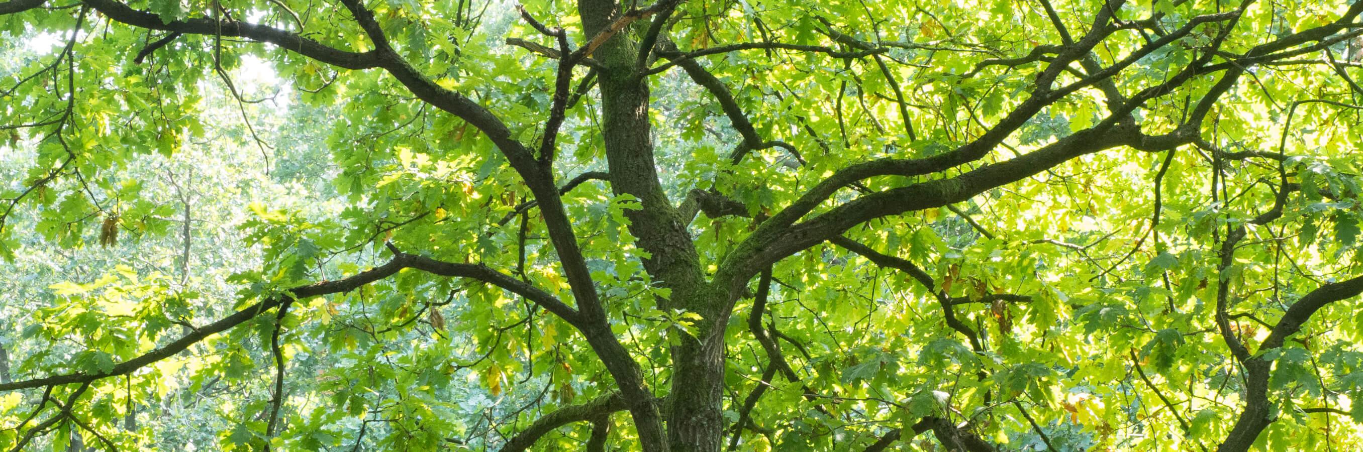 Goois natuurreservaat boom nabij locatie mindfulnesstraining