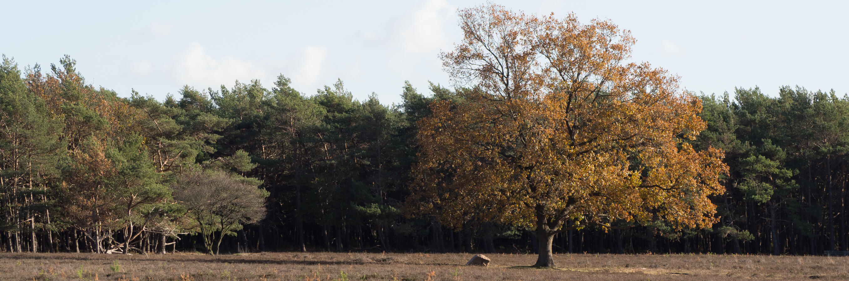 Bussum heide herfst nabij locatie compasssietraining
