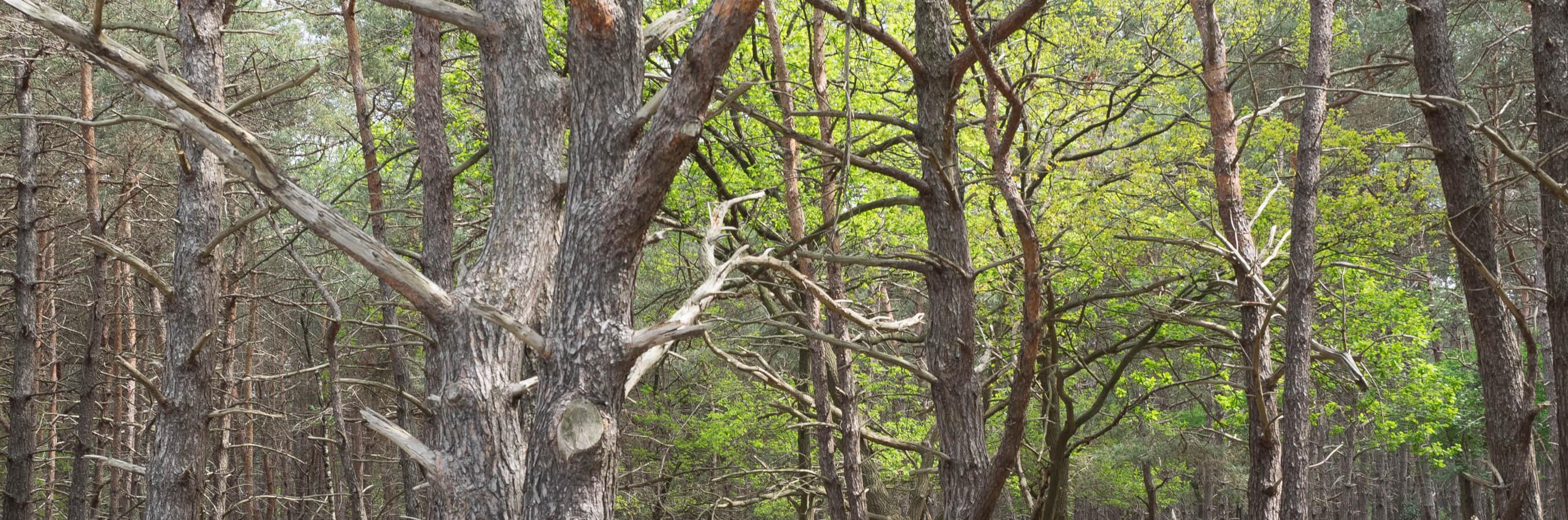 Bussum heide bomen nabij locatie mindfulness training