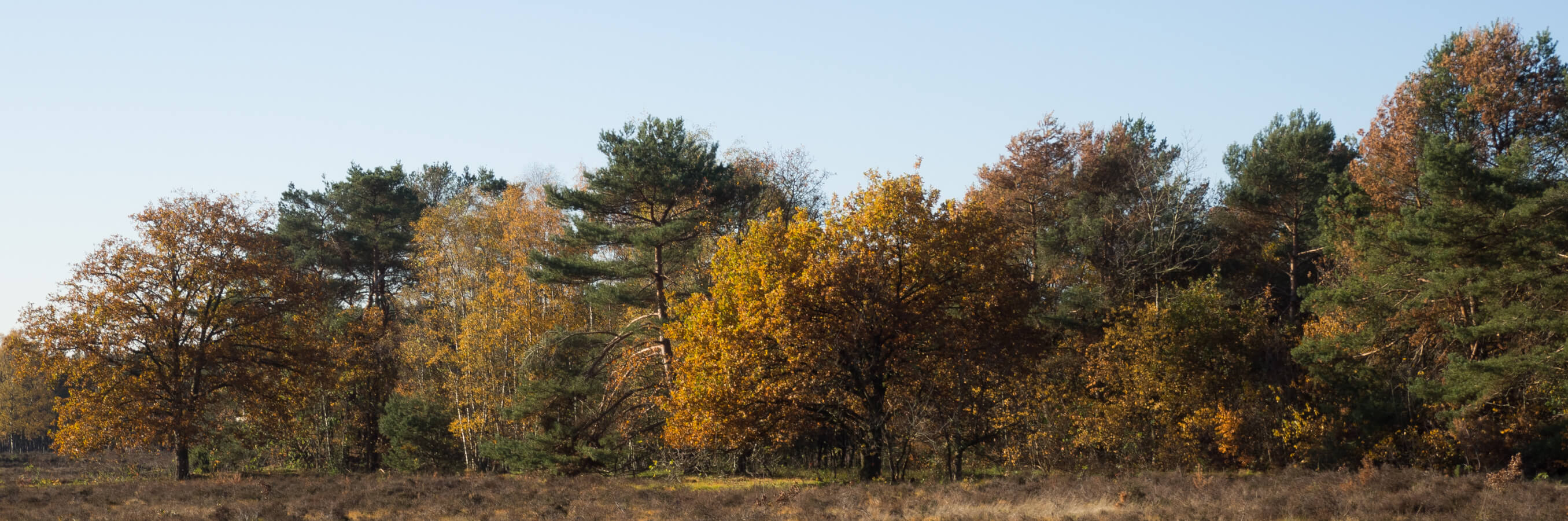 Heide Bussum herfstbomen