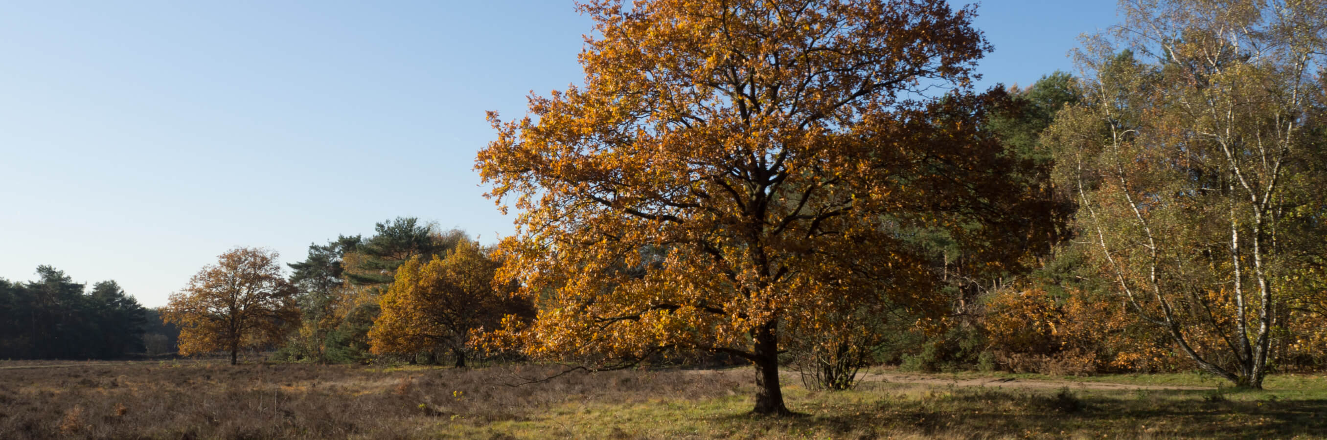 Heide Bussum herfst nabij locatie mindfulness training