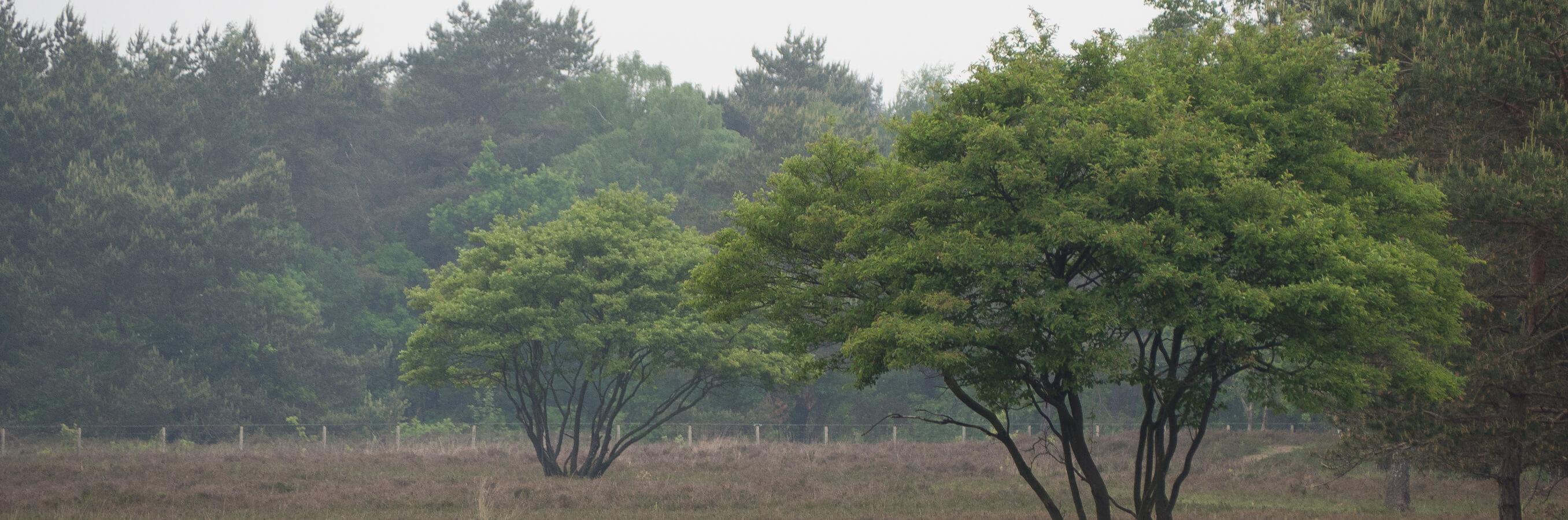 Heide Bussum krentenbomen nabij locatie mindfulnesstraining