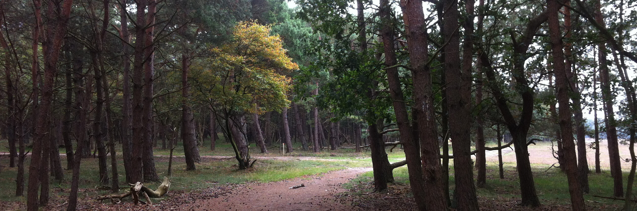 Bussum heide herfst nabij locatie compassietraining