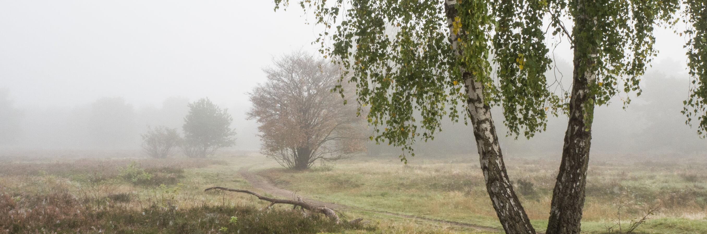 Bussum heide mist nabij locatie mindfulness training