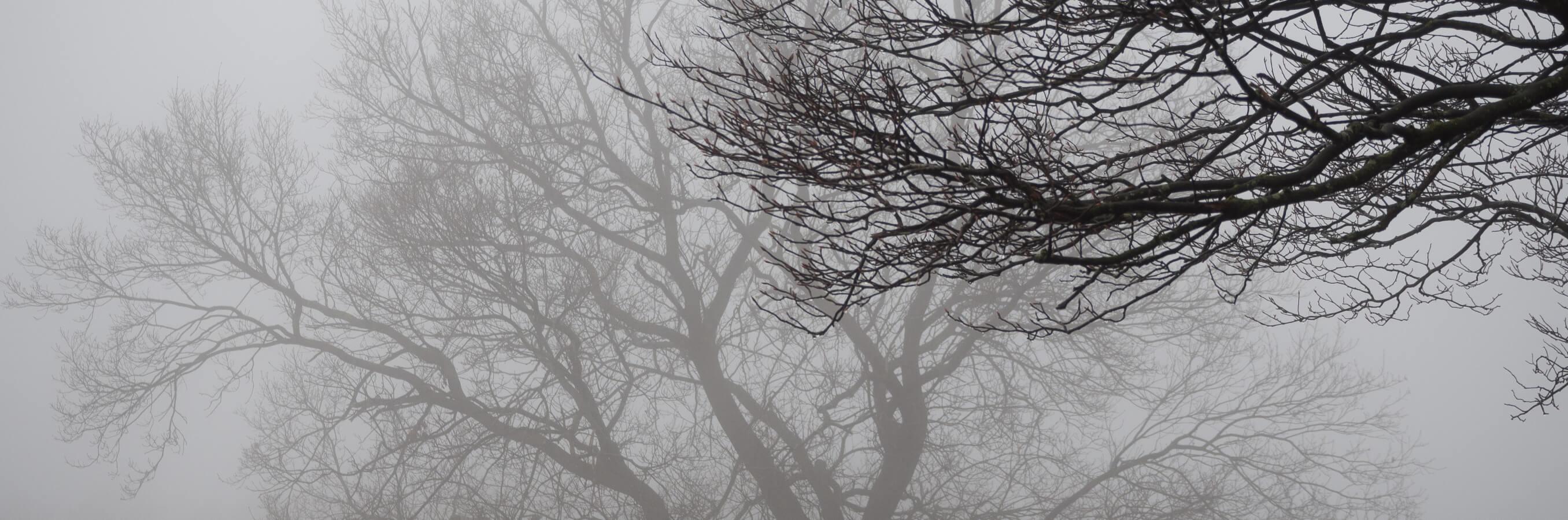 Bussum heide mist nabij locatie mindfulnesstraining