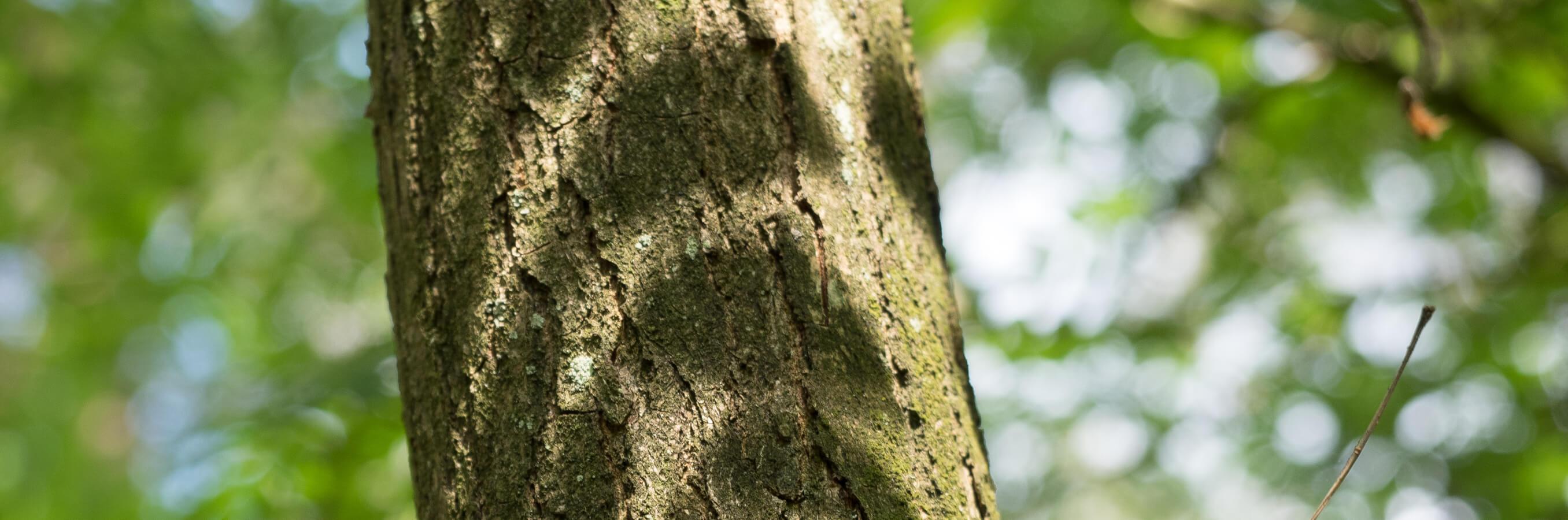 Bos Naarden schaduw bladeren op boom