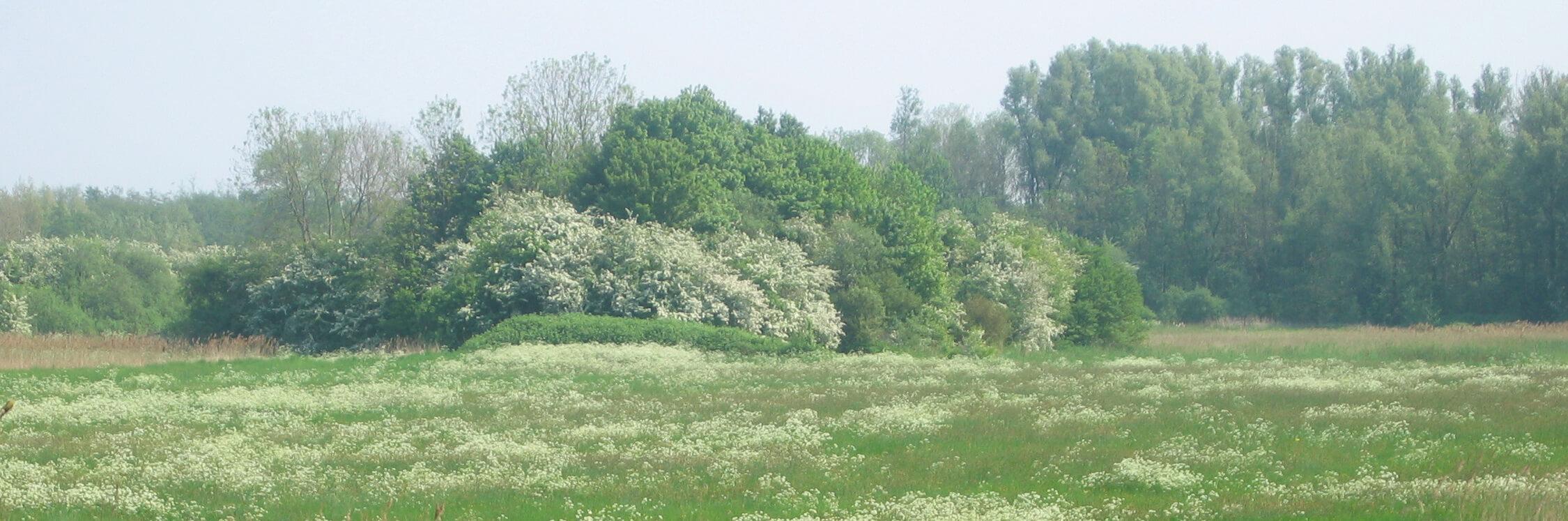 groen veld en bomen