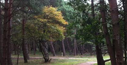 Goois-natuurreservaat-nabij-trainingsruimte-compassie